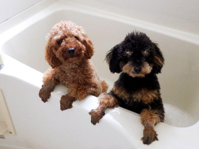 血行促進で新陳代謝も向上する「温泉浴」