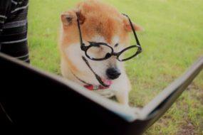 海外に古くから伝わる犬に関する諺(ことわざ)3選!