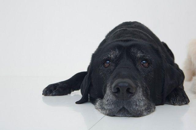 本当にあった感動実話!飼い主の死を知り黒犬が白犬になった「ソニア」の物語