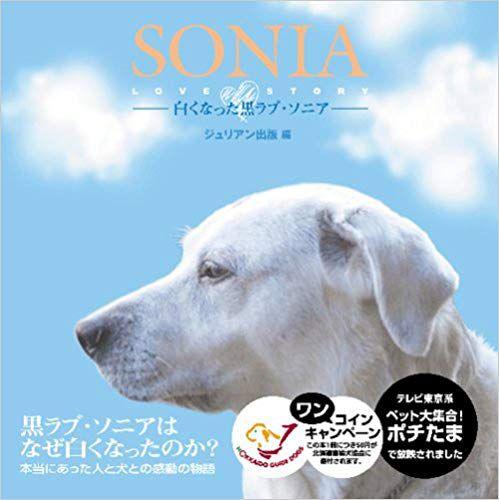 SONIA-白くなった黒ラブ・ソニア